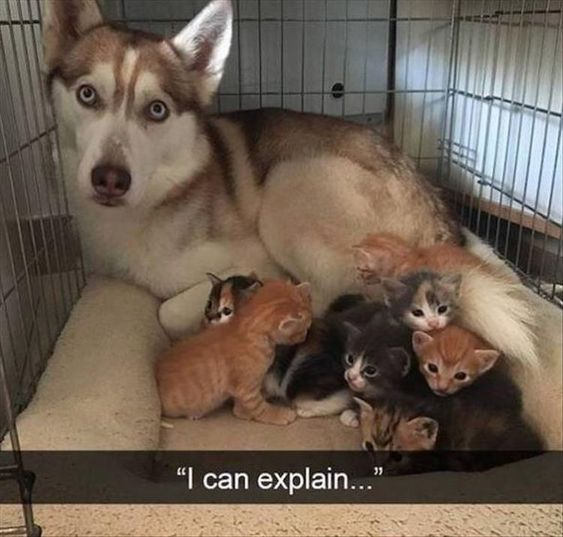 Funny Animal Pictures Of The Day 24 Pics - Funny Animals - Daily LOL Pics