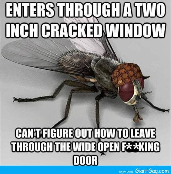Enters Through A 2 Inch Window Crack And Can't …