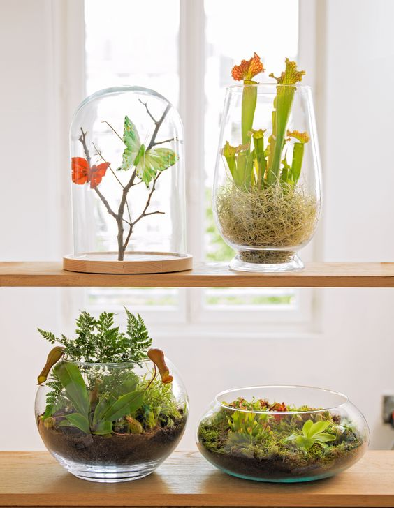 17 best images about jolies plantes terrarium. Black Bedroom Furniture Sets. Home Design Ideas