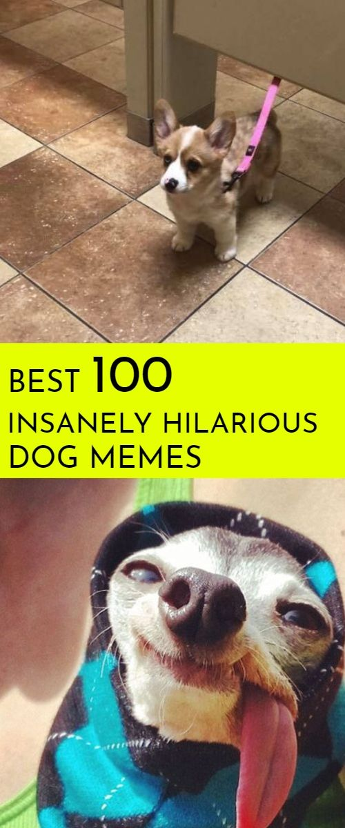 Hilarious Memes And Pictures About Dogs Memes Funny Wallpaper Dog Memes Dog Memes Clean Funny Dog Memes