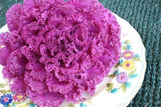 Flowering Kale Caesar Salad Recipe from awakeatthewhisk.com