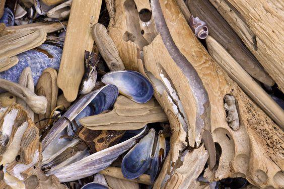 driftwood shells - Google Search