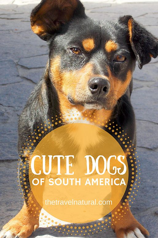 The Travel Natural | Petting the Bellies of Locals - all the cute dogs we found while travelling across South America