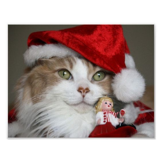 7 Reasons Your Cat Thinks Christmas Is 100 Percent About Them Cattime Merry Christmas Cat Christmas Cats Christmas Kitten
