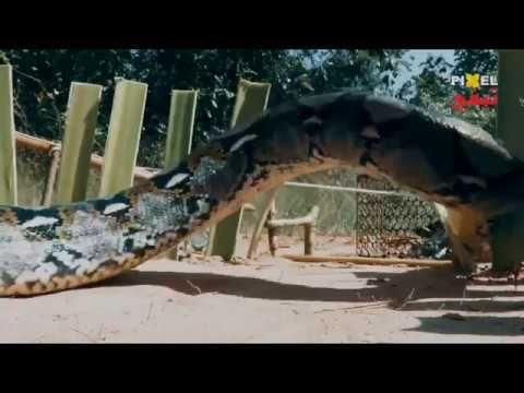 فخ ثعبان تقليدي مرعب صيد ثعبان كبير عن طريق فخ تقليدي Aquarium