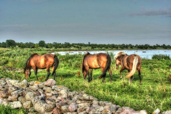 #horses #summer #sweden #hdr