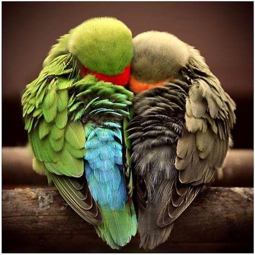 Sweet birdie love.