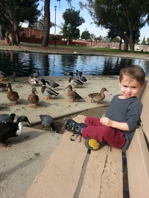 Spency not being too sure about the ducks...they were a little too close for his liking haha. Lilly and I fed a goose and the big ducks by hand. Super cute♡