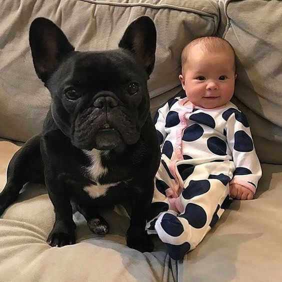Bulldogs And Babies 24 Dogs And Kids French Bulldog Puppies