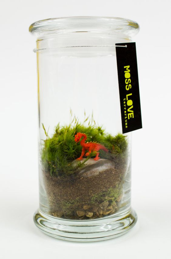 Dragon Moss Terrarium by MossLoveTerrariums on Etsy, $25.00