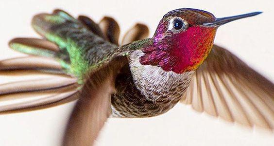 Esta fotógrafa captura bellas imágenes de colibríes en su patio trasero
