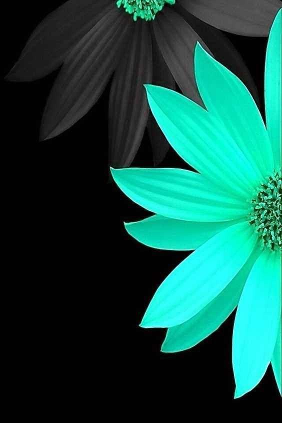 Lunapic Editimage Blue Flower Wallpaper Flower Wallpaper Art Wallpaper Coolest flower turquoise wallpapers