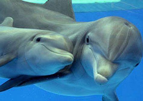 Gratis spilleautomat nedlastinger dolphin