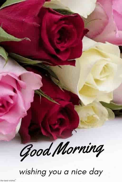 Best Good Morning Hd Images Wishes Pictures And Greetings Good Morning Flowers Good Morning Flowers Pictures Morning Flowers