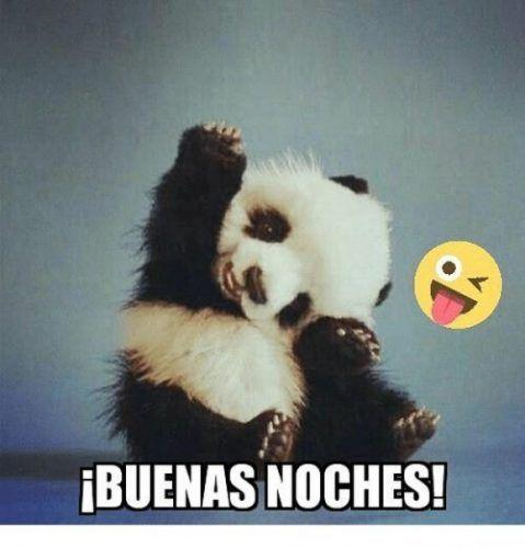 Mejores 40 Imagenes De Buenas Noches Chistosas Mejores Imagenes Panda Bear Animals Memes