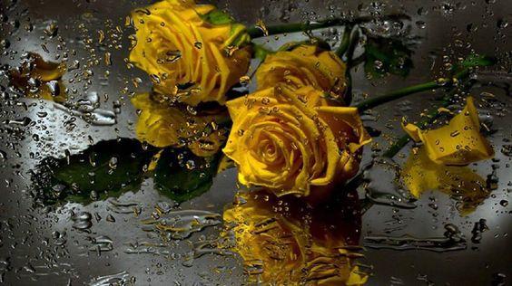 Foi para ti /que desfolhei a chuva /para ti soltei o perfume da terra /toquei no nada /e para ti foi tudo...