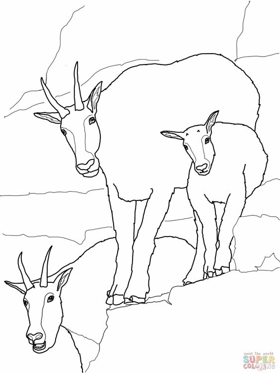 Mountain Goat Coloring Page Family Coloring Pages Animal Coloring Books Sports Coloring Pages