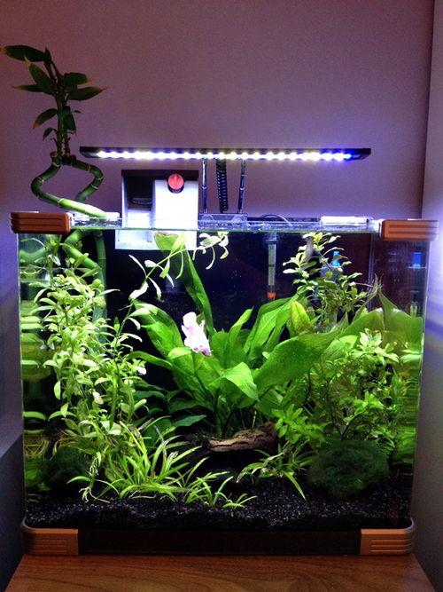 Pinterest the world s catalog of ideas for Plante nano aquarium