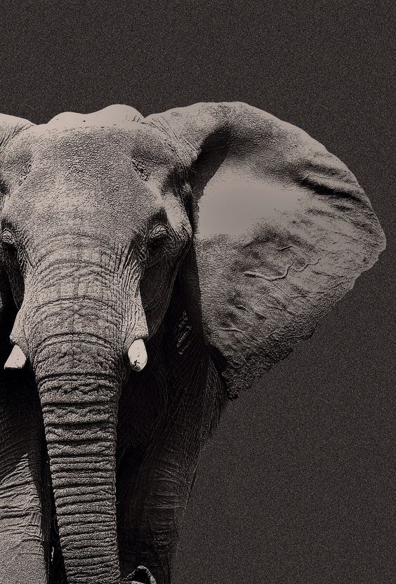 TAP AND GET THE FREE APP! Animals Unicolor Elephant