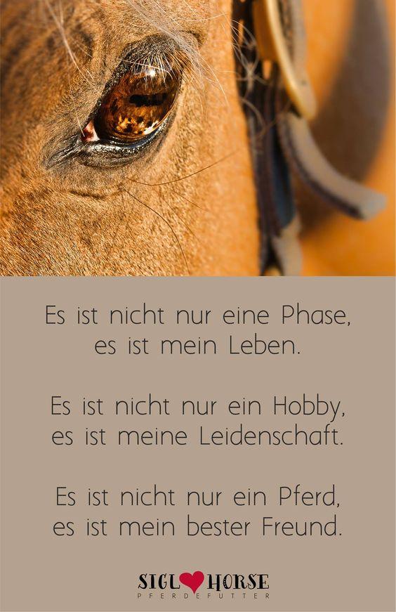Es ist nicht nur eine Phase, es ist mein Leben. Es ist nicht nur ein Hobby, es ist meine Leidenschaft. Es ist nicht nur ein Pferd, es ist mein bester Freund. #pferd #pferdeliebe