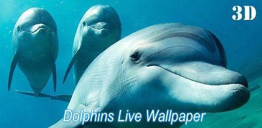 イルカライブ壁紙無料の3dを入手 イルカは 最も美しい海の動物で