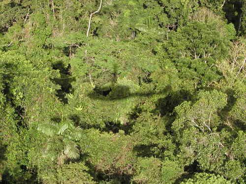 Shadows on Canopy - Yasuni National Park - Ecuador