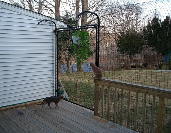 Cat Enclosure Cats And Decks On Pinterest