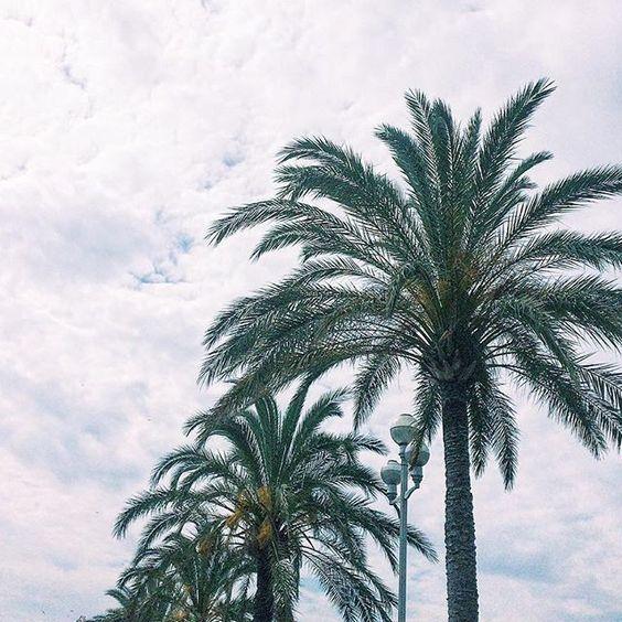 Saí de Marselha hoje cedinho, tirei o dia para conhecer Nice e fazer um bate volta para Mônaco! Veja mais no snap > hittheroadgirls hit the road girls - blog de viagem - palm tree - travel blog - screensaver free - wallpaper free - travel tip - France - Europe - places to visit