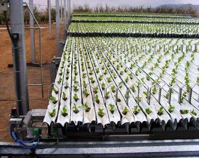 THM - Tecnologías de la Horticultura Mediterránea: Automatización del cultivo de la lechuga en invernadero