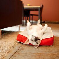 French bulldog.  Awww