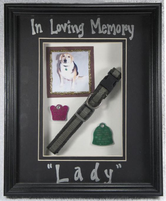 Pet shadow box to remember them by. So Cute.
