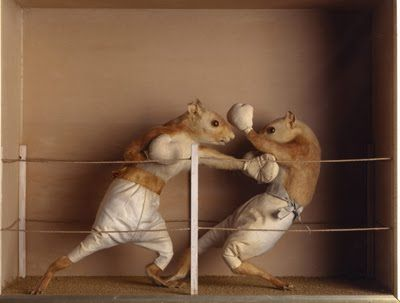 Boxing Squirrels Taxidermy. Reminds me of @Jennifer Lawson