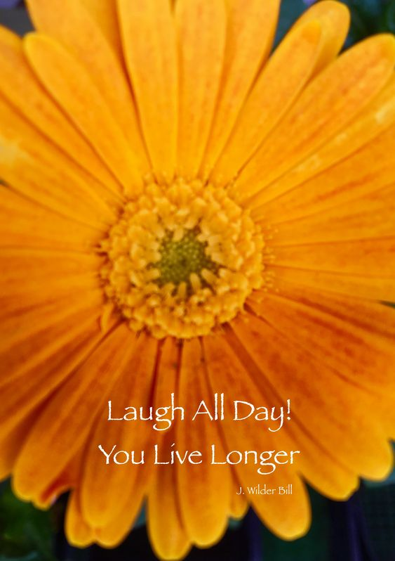 orange flower - Laugh All Day!
