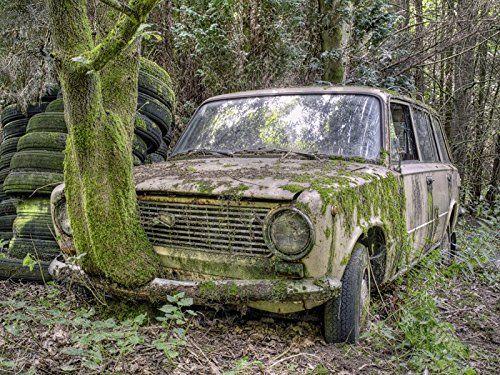 Carina Buchspies Rostlaube mit Baum - Lada  #abandoned #lostplace #rostlaube