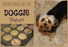 Google+ Frozen Peanut Butter Yogurt Dog Treats Ingredients 32 ounces vanilla yogurt 1 cup peanut butter Directions: Melt the peanut butter in a microwave safe bowl Combine the yogurt and melted peanut butter Pour the mixture into cupcake papers Place in the freezer Note: Mini muffins tins, candy trays, and ice cube trays all work well for bite size treats.