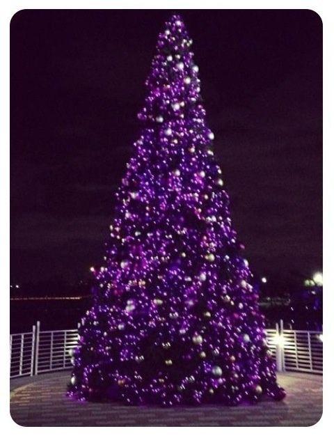 Purple Christmas tree.