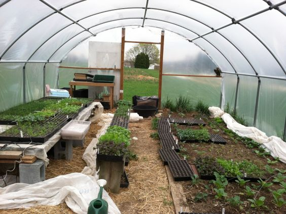 Full Hoop House Build A Greenhouse Greenhouse Plans Greenhouse