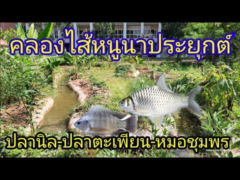 ปลาน ลและปลาชน ดต างๆข างคลองไส หน นา สวนผ กข างคลองไส หน นา สวนผ ก บ อปลาอาหารข างบ าน Youtube