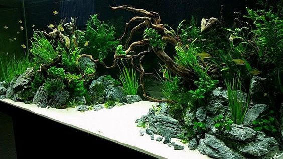 450 l tank aquascape 2015 by silverlihgt germany pin by aqua poolkoh tank pinterest. Black Bedroom Furniture Sets. Home Design Ideas