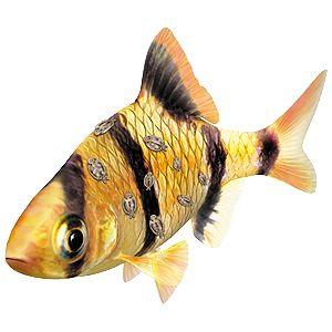 Aquarium fish diseases and how to spot them tetra for Tropical fish diseases