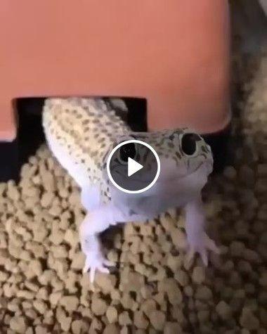 Animal sai para procurar comida
