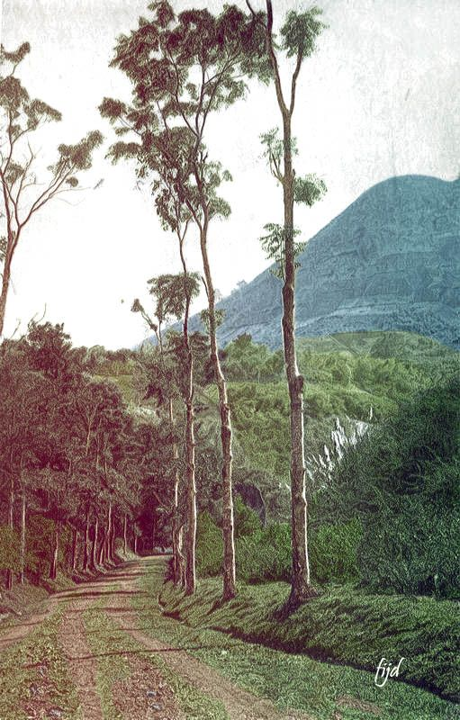 Jalan Ke Leles Garut Jawa Barat 1905 Pemandangan Sejarah Dunia Foto Zaman Dulu