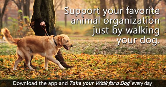 This is a wonderful app for both you, your dog, and your local animal shelter. Try it now!