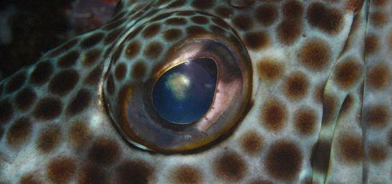 Zackenbarsche - unser Bericht in der Kategorie Biologie in DiveInside - dem frischen Onlinemagazin von Taucher.Net