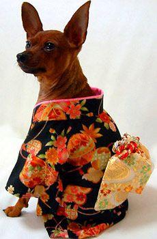 pup kimono