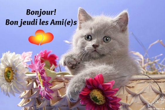 Bonjour! Bon jeudi les Ami(e)s #jeudi chat chaton panier bon jeudi