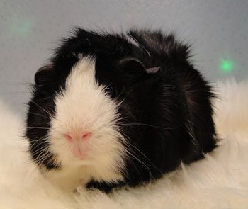 If I could I would get another piggy! But I already have 2 check out my page to c wat they look like! There names: buttercup and swirly!