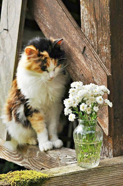 definitely thinking about knocking that vase over....