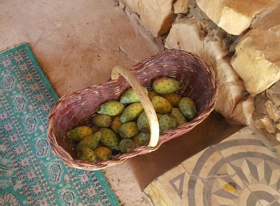 Frash prickly pear