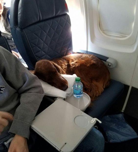25 + φωτογραφίες από ασυνήθεις επιβάτες αρκετά αστείοι
